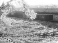 railroadyardsdenver1977leaves-sm